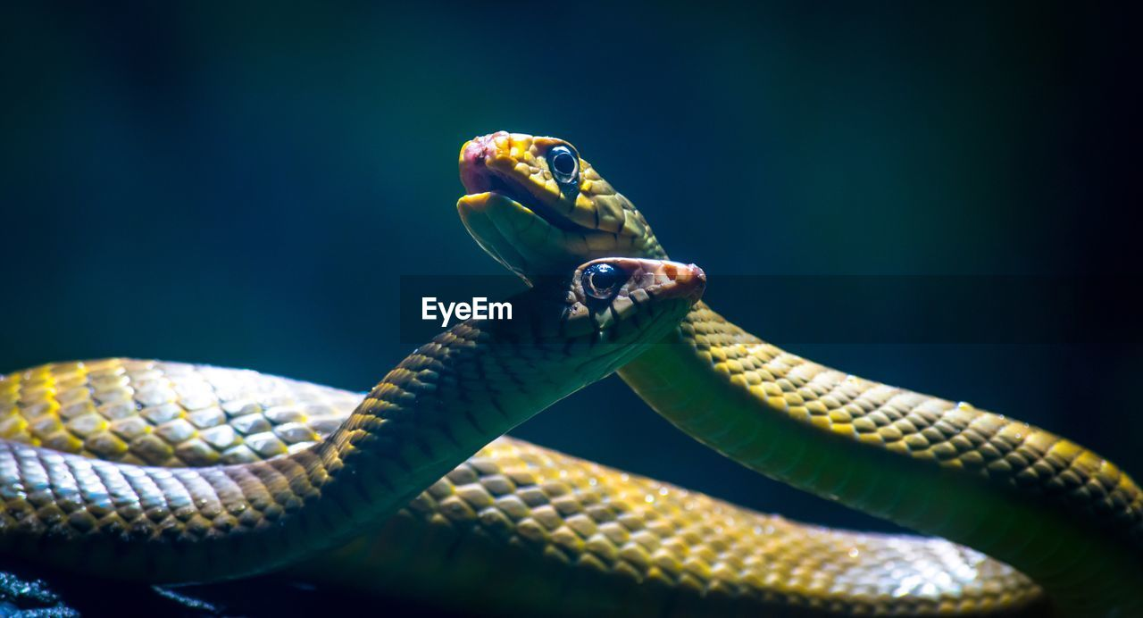 Close-Up View Of Snakes