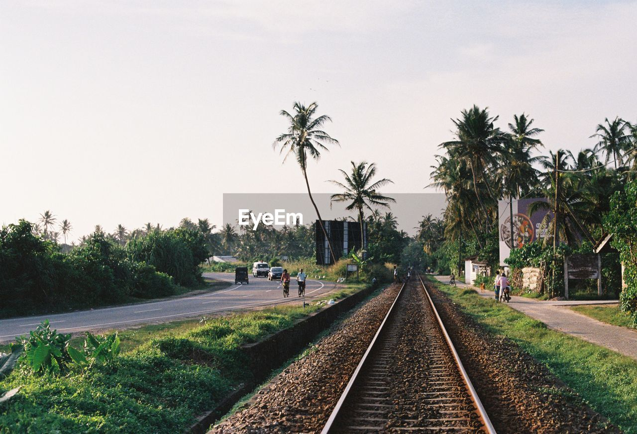 tree, plant, track, palm tree, sky, railroad track, rail transportation, transportation, nature, tropical climate, diminishing perspective, clear sky, direction, the way forward, day, mode of transportation, growth, vanishing point, outdoors, incidental people, coconut palm tree