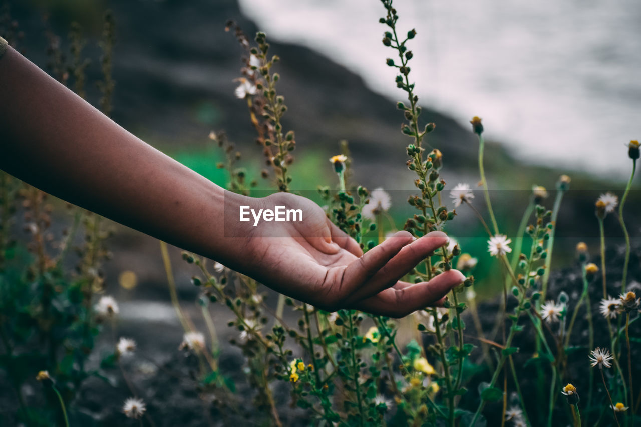 Cropped hand of woman holding flowering plant