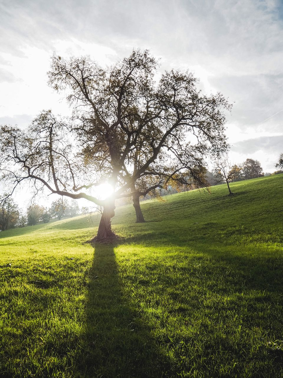 Trees on grassy field against sky