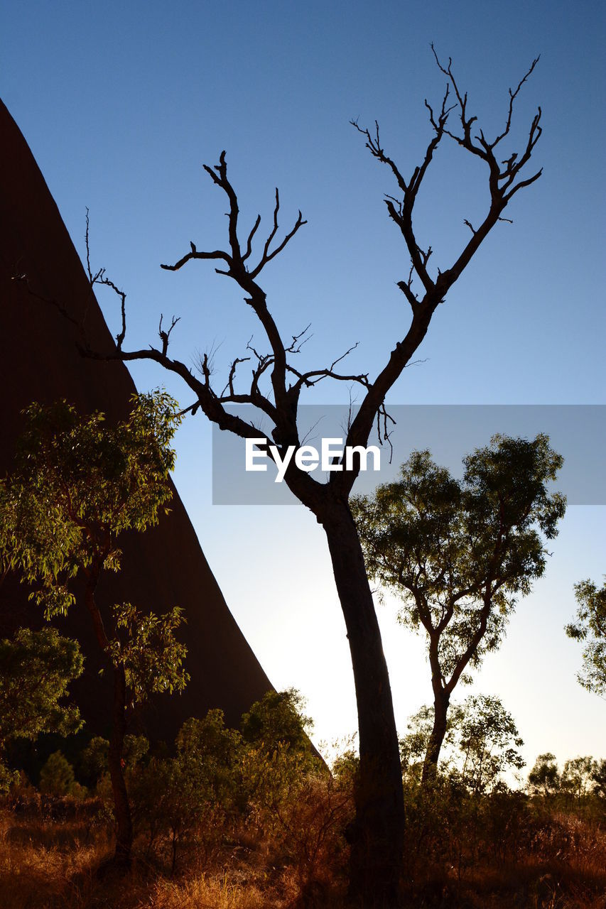 tree, plant, sky, tranquility, nature, scenics - nature, beauty in nature, no people, growth, tranquil scene, clear sky, branch, day, outdoors, non-urban scene, silhouette, land, low angle view, tree trunk, trunk
