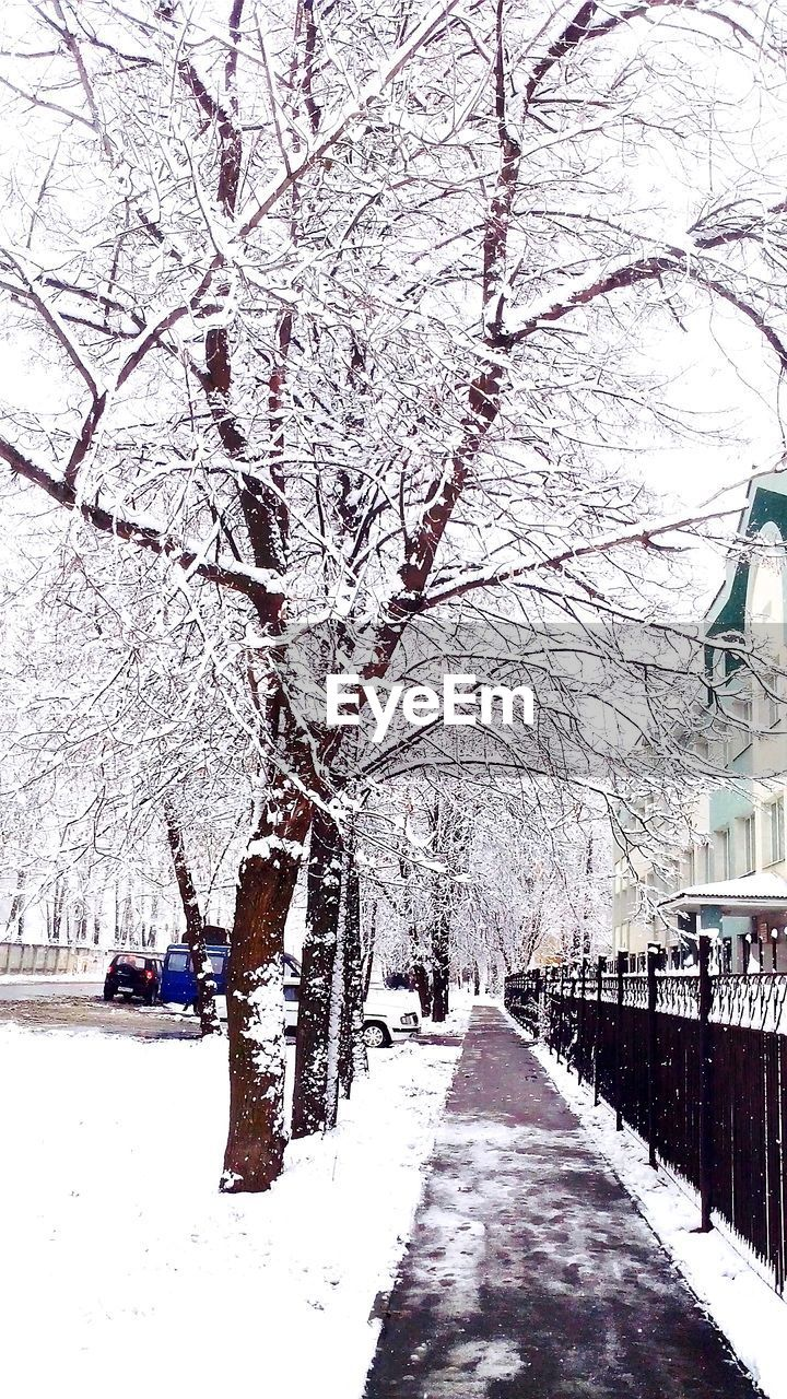 tree, snow, winter, nature, branch, cold temperature, beauty in nature, white color, road, bare tree, blossom, the way forward, outdoors, transportation, day, building exterior, no people, sky, architecture, springtime, scenics, built structure, flower, fragility, city, freshness