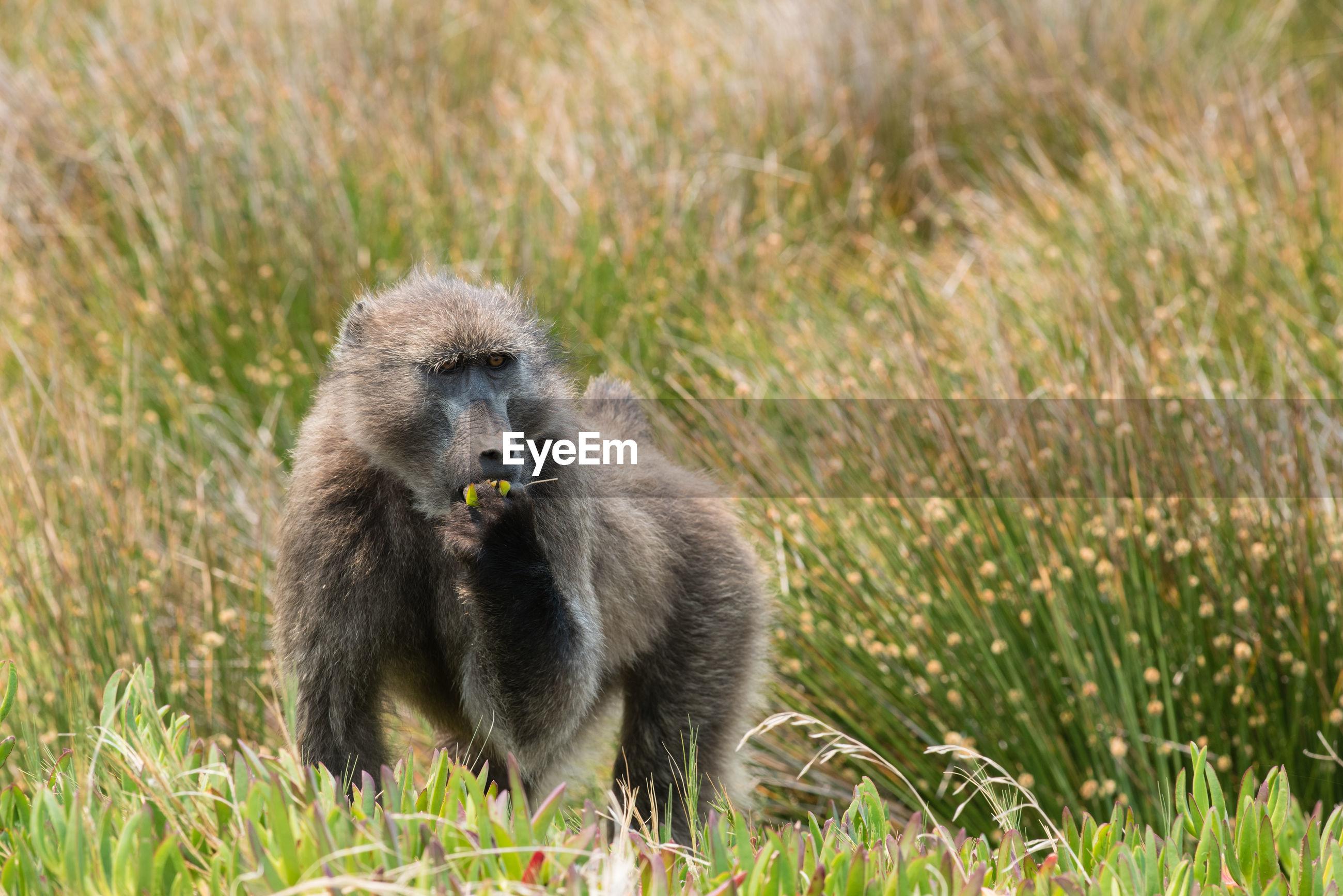 Monkey amidst plants on field