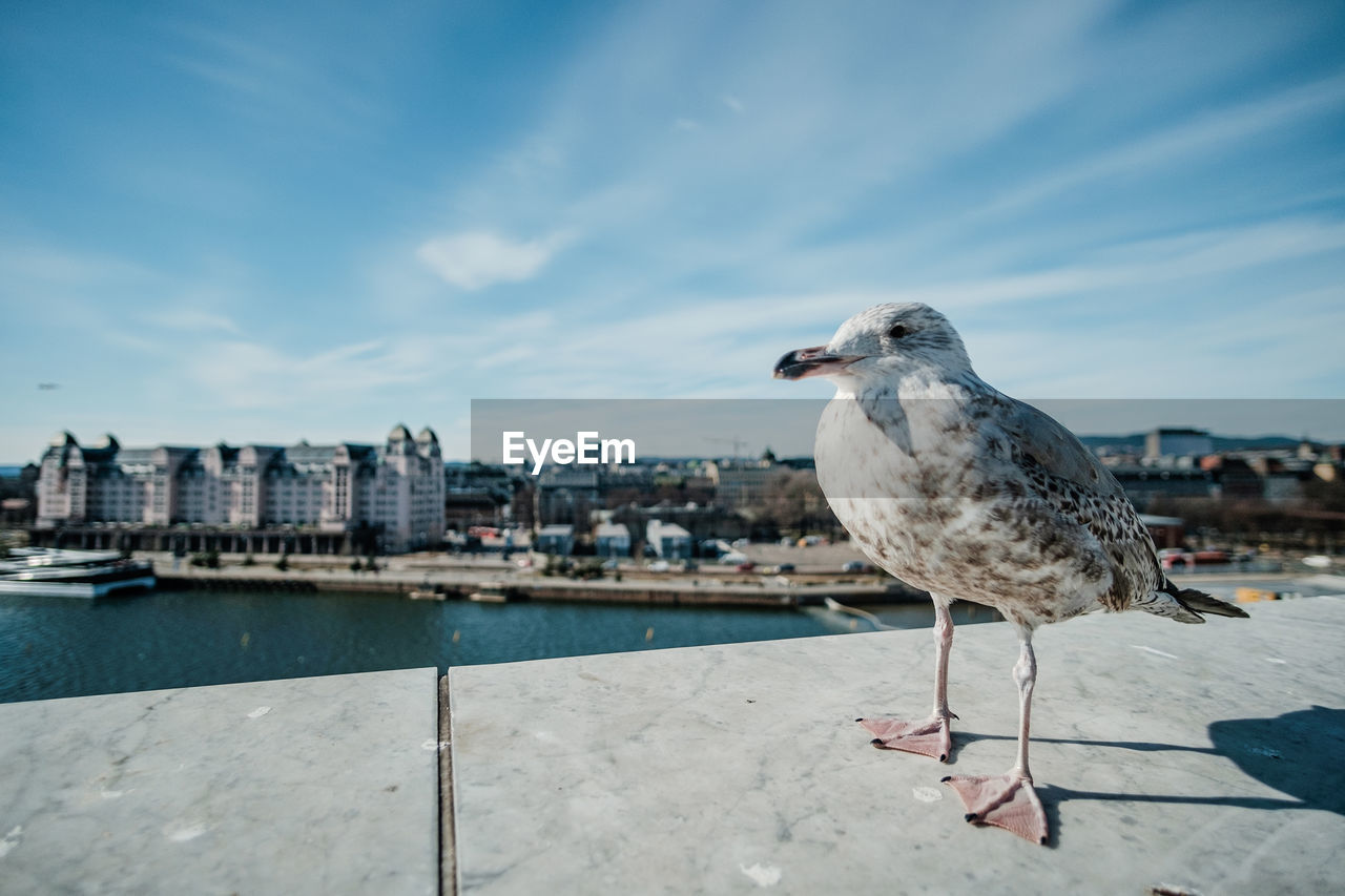 architecture, building exterior, built structure, water, animals in the wild, animal wildlife, vertebrate, animal, sky, seagull, animal themes, city, nature, bird, one animal, perching, retaining wall, day, wall, cityscape, no people, outdoors