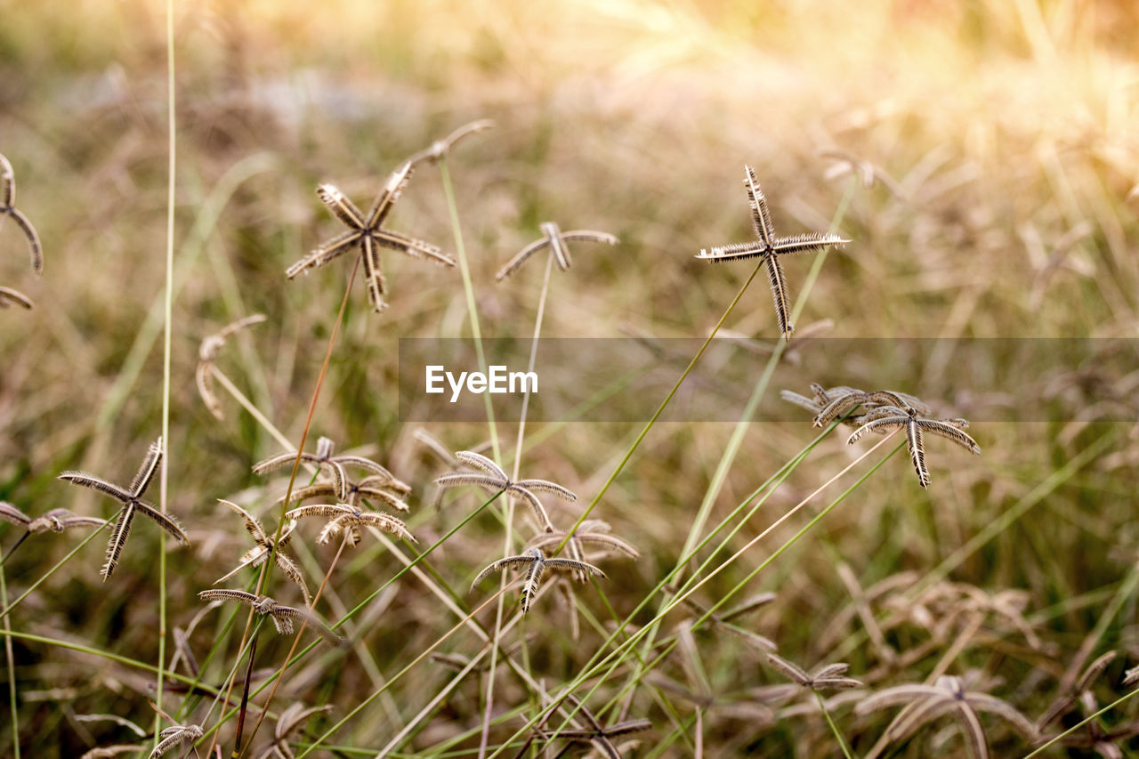 nature, field, growth, plant, focus on foreground, no people, outdoors, day, grass, tranquility, close-up, beauty in nature
