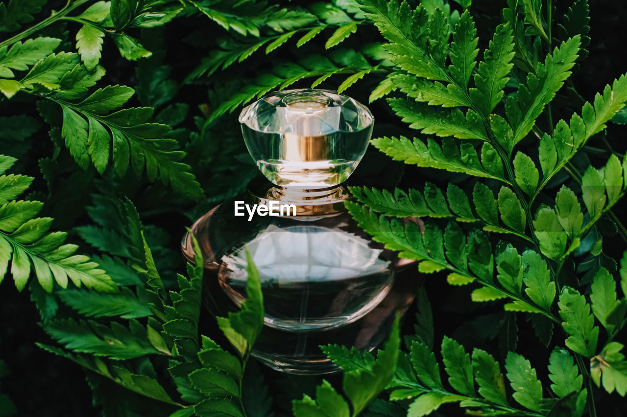 Close-up of perfume amidst plants