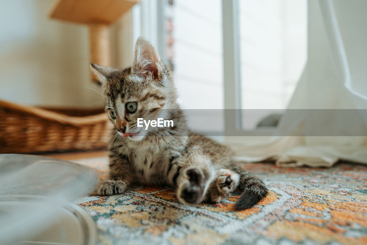 Close-up of kitten relaxing on carpet at home
