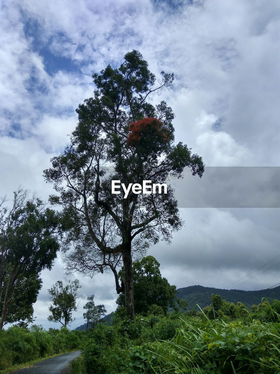 tree, cloud - sky, sky, nature, growth, day, outdoors, beauty in nature, no people, tranquility, landscape, scenics, tranquil scene, low angle view, mountain, plant