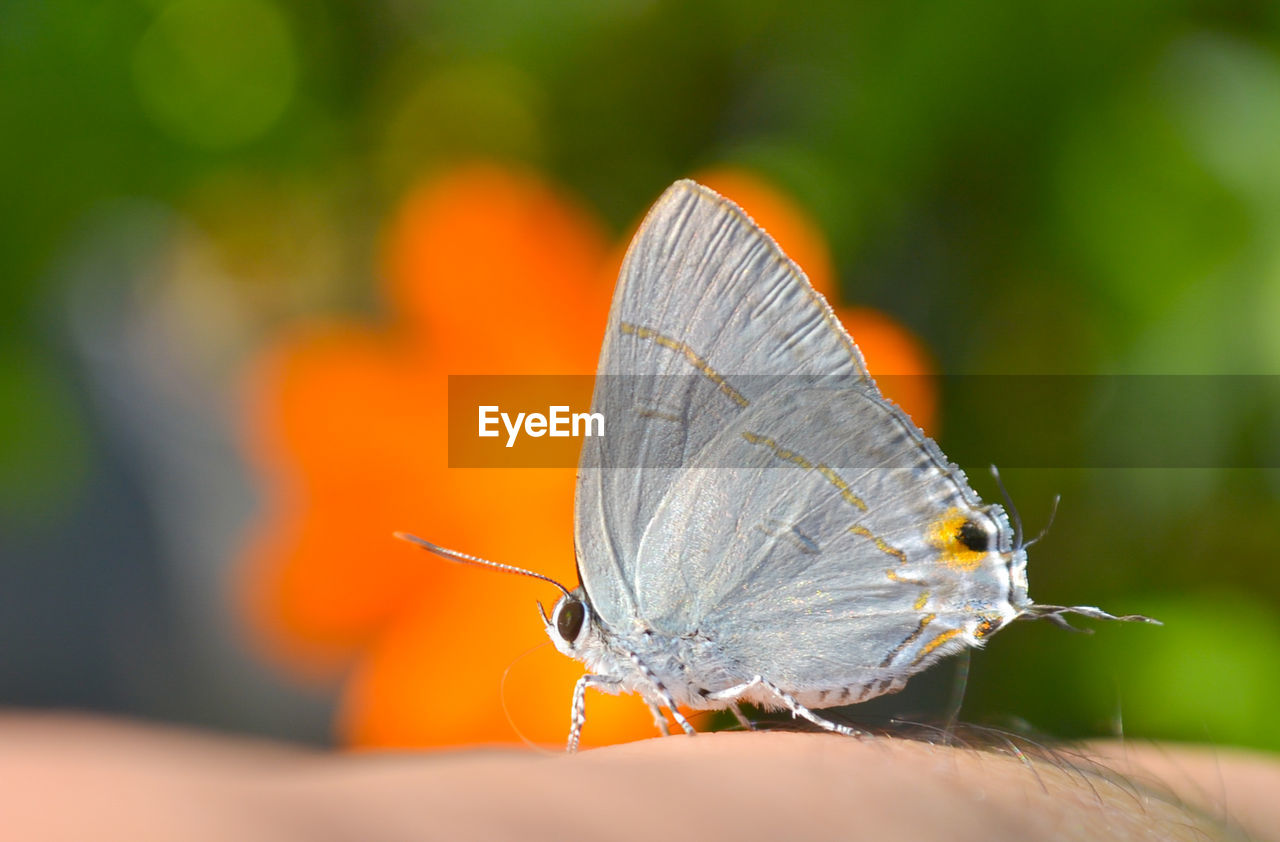 insect, animals in the wild, butterfly - insect, one animal, animal themes, butterfly, nature, focus on foreground, outdoors, close-up, animal wildlife, human body part, day, fragility, human hand, one person, people