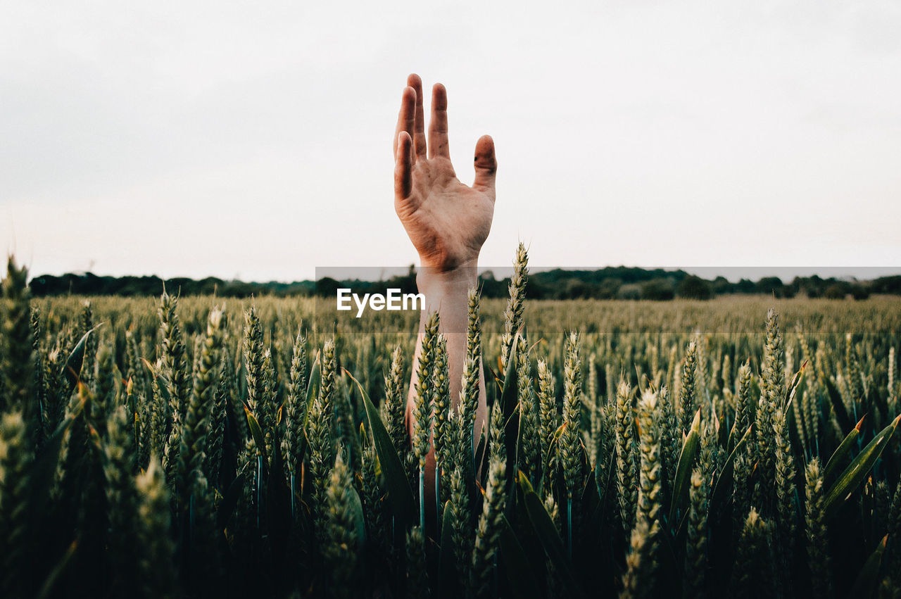 Cropped hand against plants in field