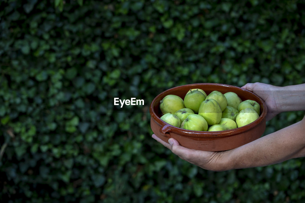 Cropped Hands Holding Bowl With Fruits Against Plants