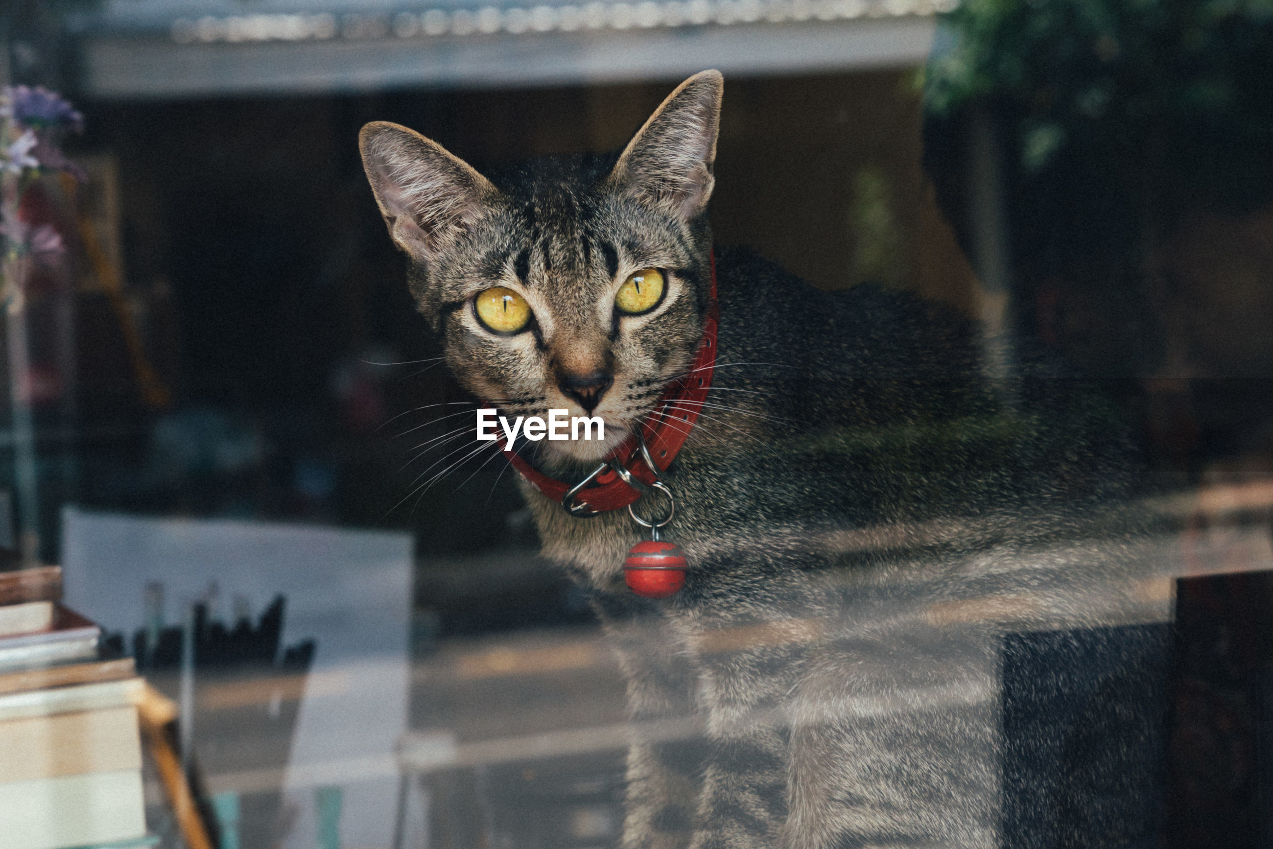 Close-up portrait of cat looking through window