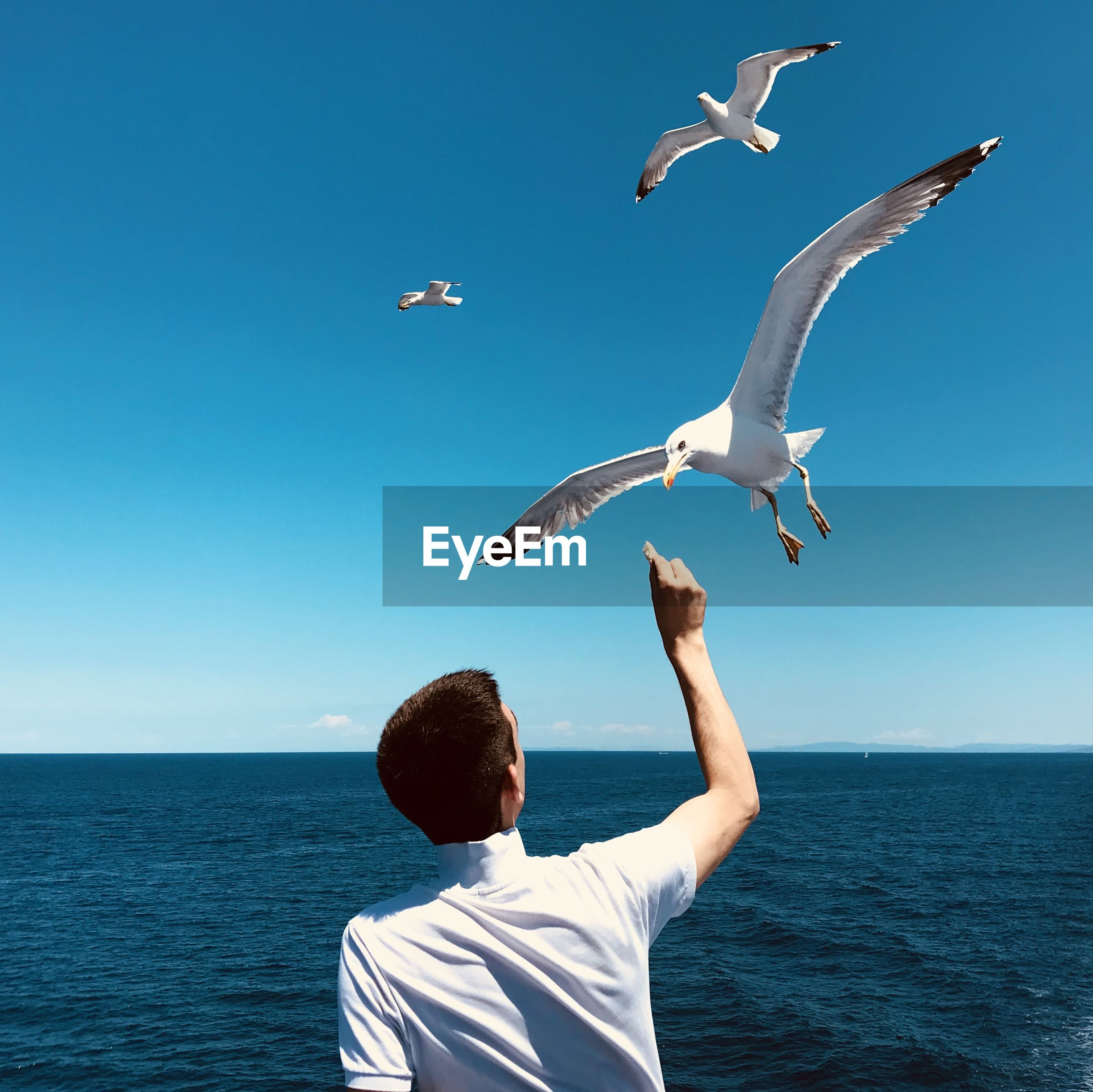 Rear view of seagulls flying over sea against sky
