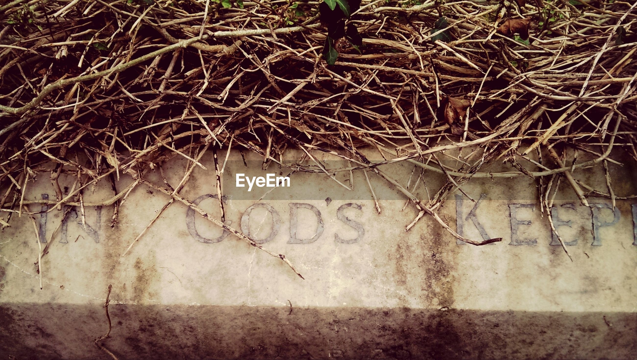 Dry grass and text on tombstone at cemetery