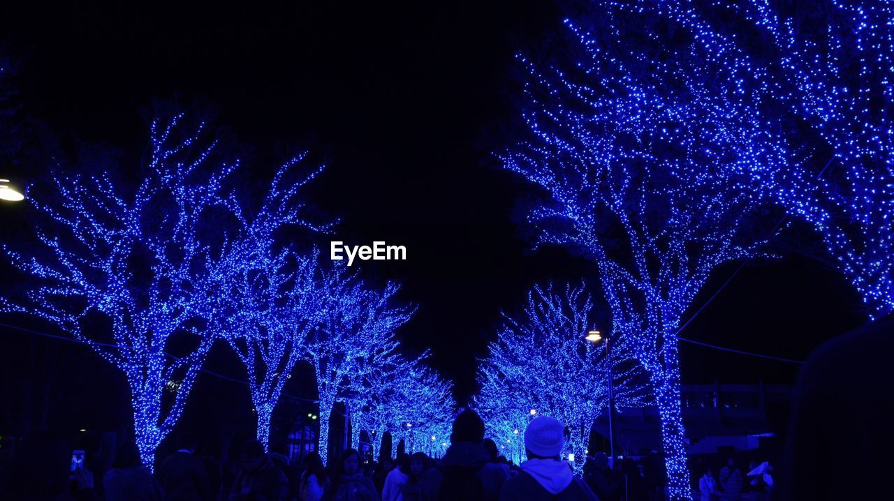 Silhouette people standing by illuminated trees at night