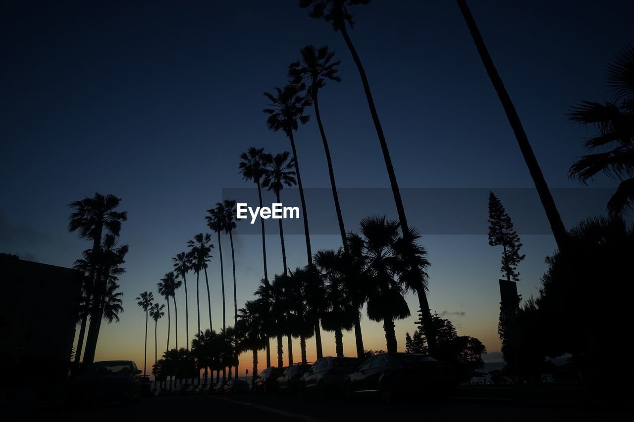 palm tree, tree, silhouette, growth, sky, sunset, no people, nature, outdoors, beauty in nature, day