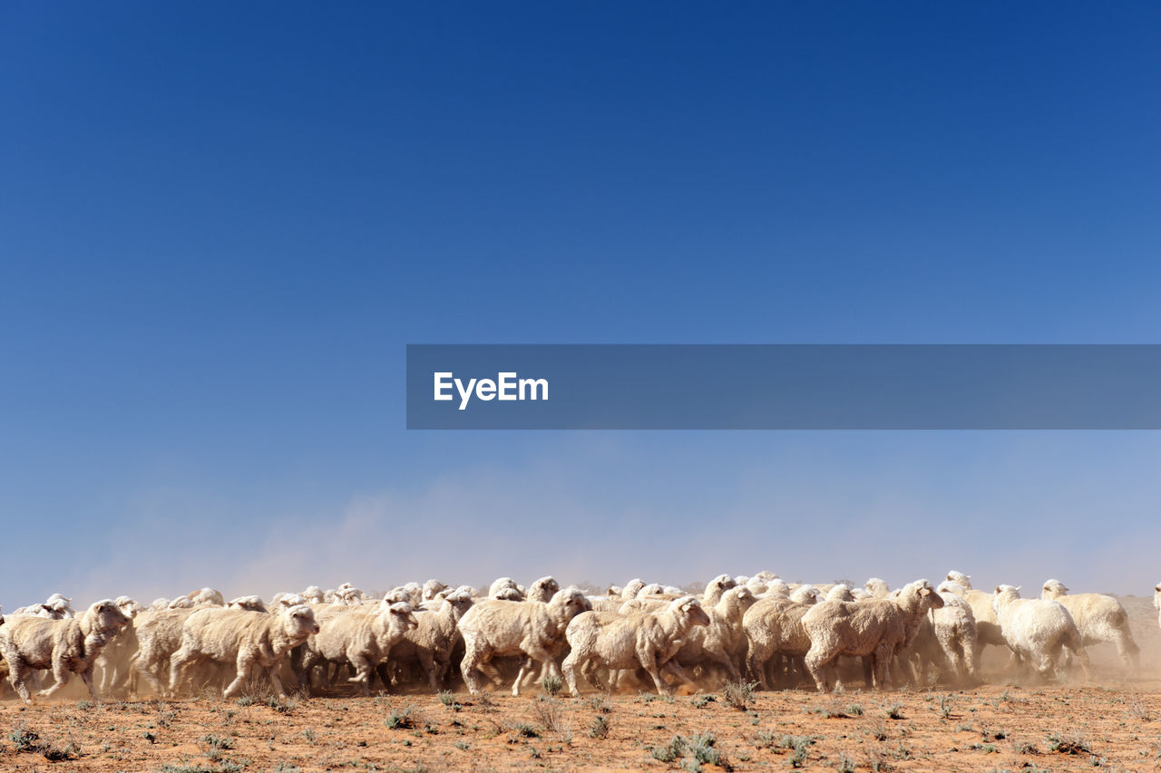 Flock Of Sheep On Field During Sunny Day