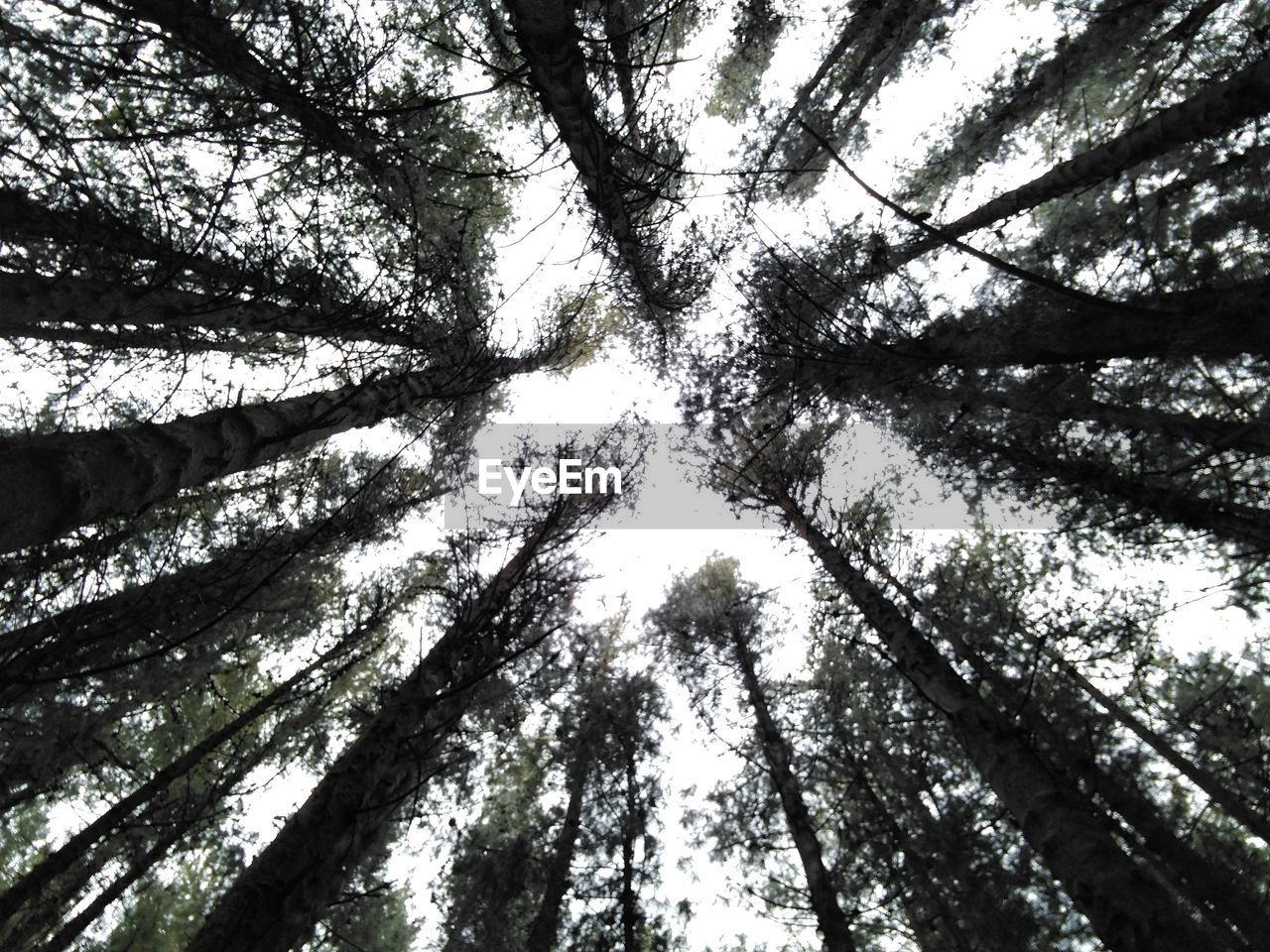 tree, low angle view, tree trunk, nature, growth, forest, tree canopy, branch, directly below, day, tranquility, no people, beauty in nature, outdoors, woodland, backgrounds, tranquil scene, scenics, sky
