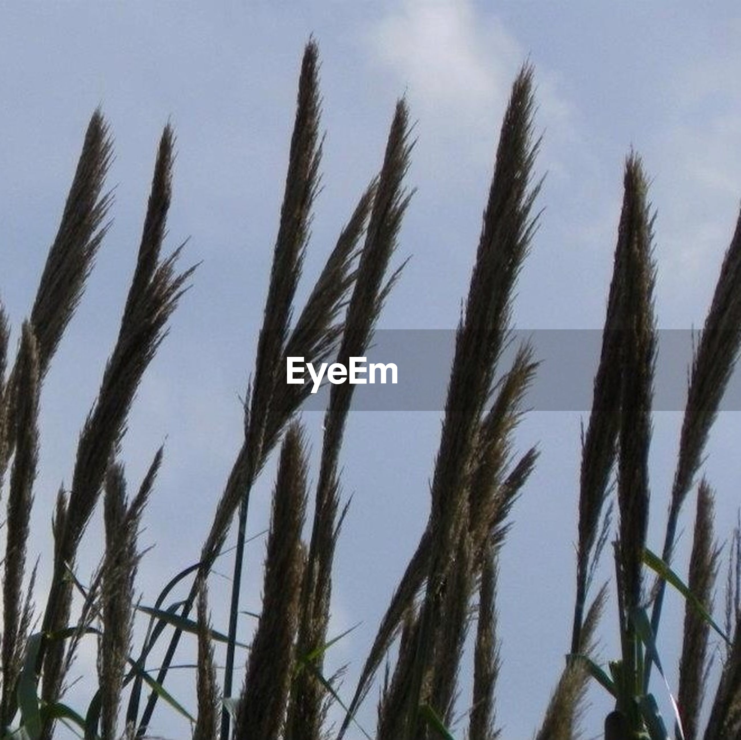 growth, sky, tranquility, nature, low angle view, plant, beauty in nature, tranquil scene, grass, day, tree, outdoors, branch, scenics, no people, cloud, growing, cloud - sky, close-up, field