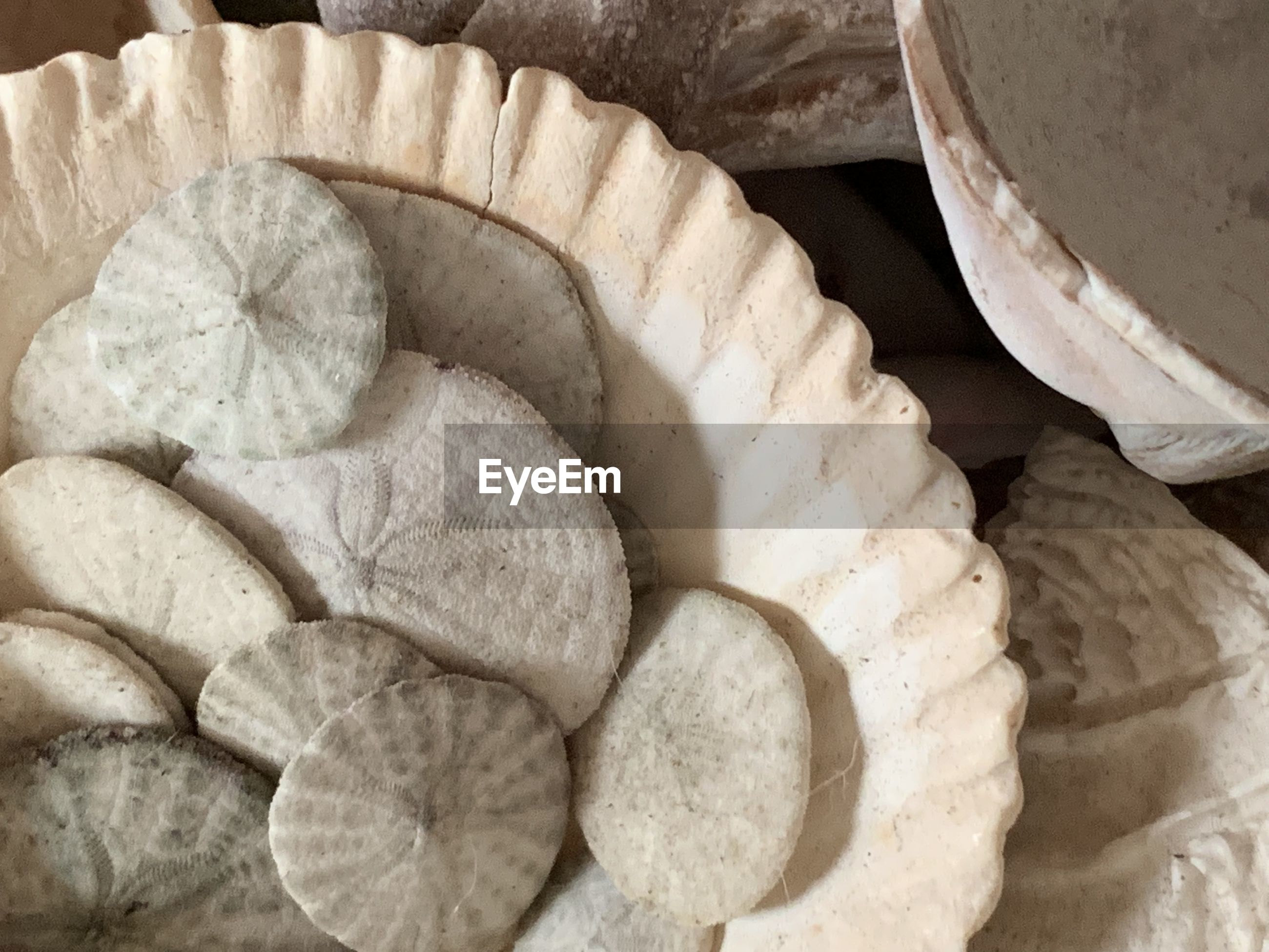 Directly above shot of sand dollars in bowl