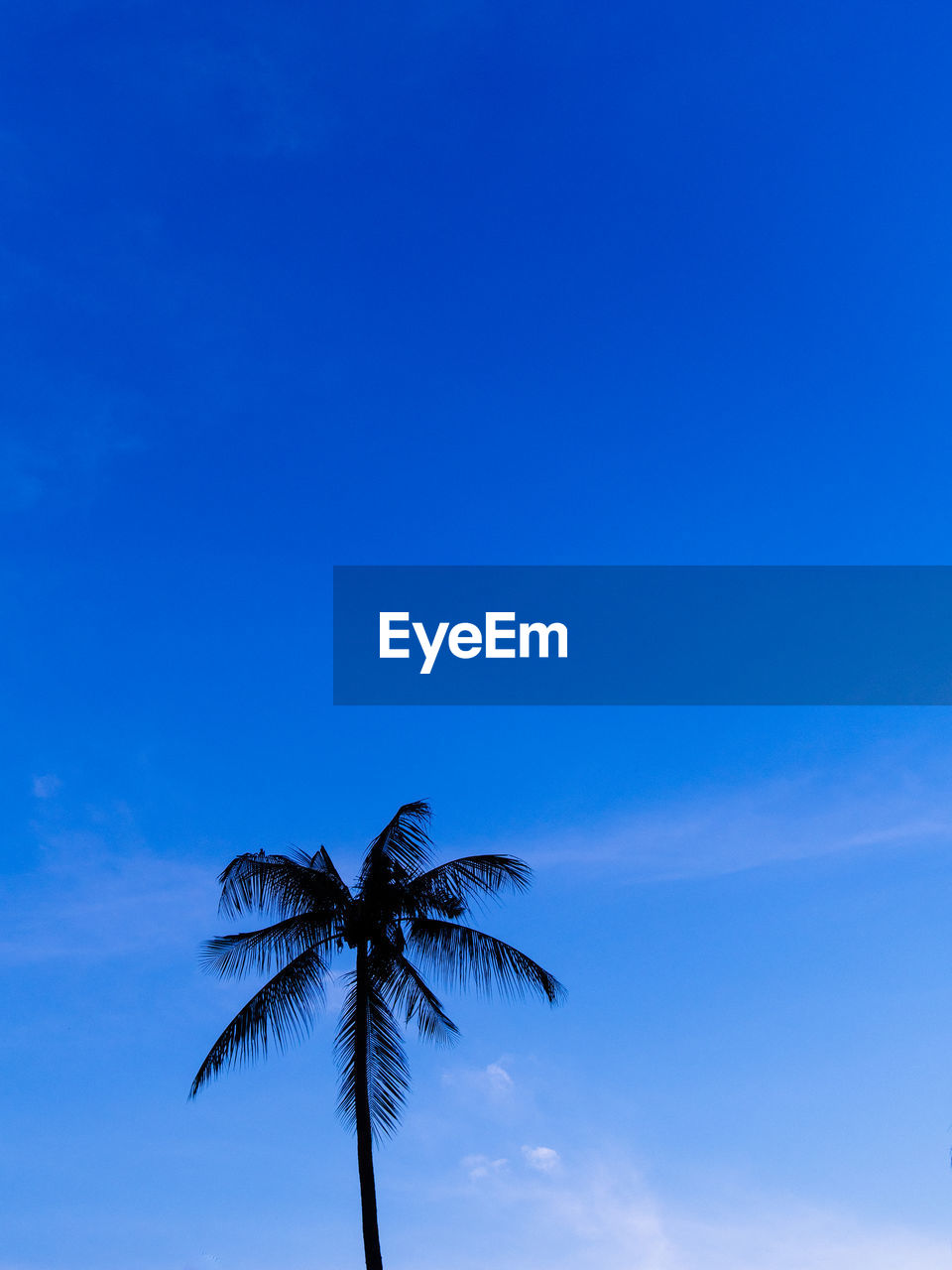 sky, palm tree, tropical climate, blue, tree, low angle view, beauty in nature, copy space, plant, nature, no people, tranquility, coconut palm tree, scenics - nature, growth, tranquil scene, leaf, outdoors, day, cloud - sky, palm leaf, tropical tree