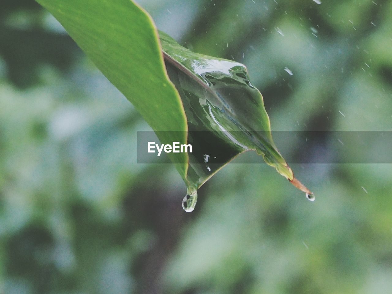 drop, water, nature, leaf, plant, growth, wet, beauty in nature, day, focus on foreground, no people, fragility, green color, close-up, outdoors, raindrop, freshness, purity, animal themes
