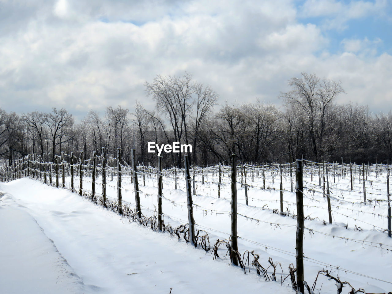 snow, cold temperature, winter, cloud - sky, sky, tree, white color, bare tree, plant, no people, tranquility, beauty in nature, tranquil scene, nature, scenics - nature, field, covering, land, day, outdoors, wooden post