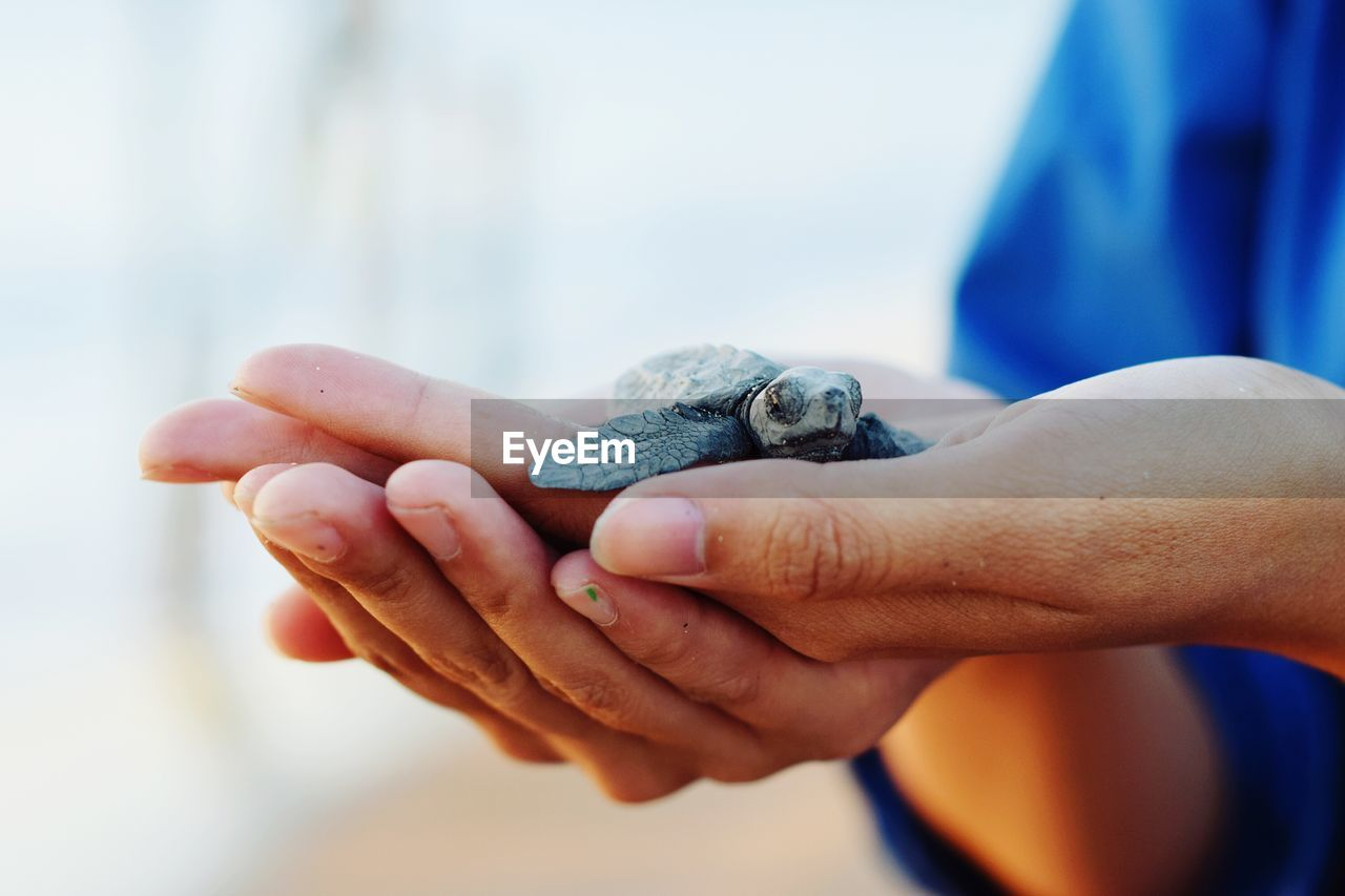 Cropped Hands Holding Small Turtle