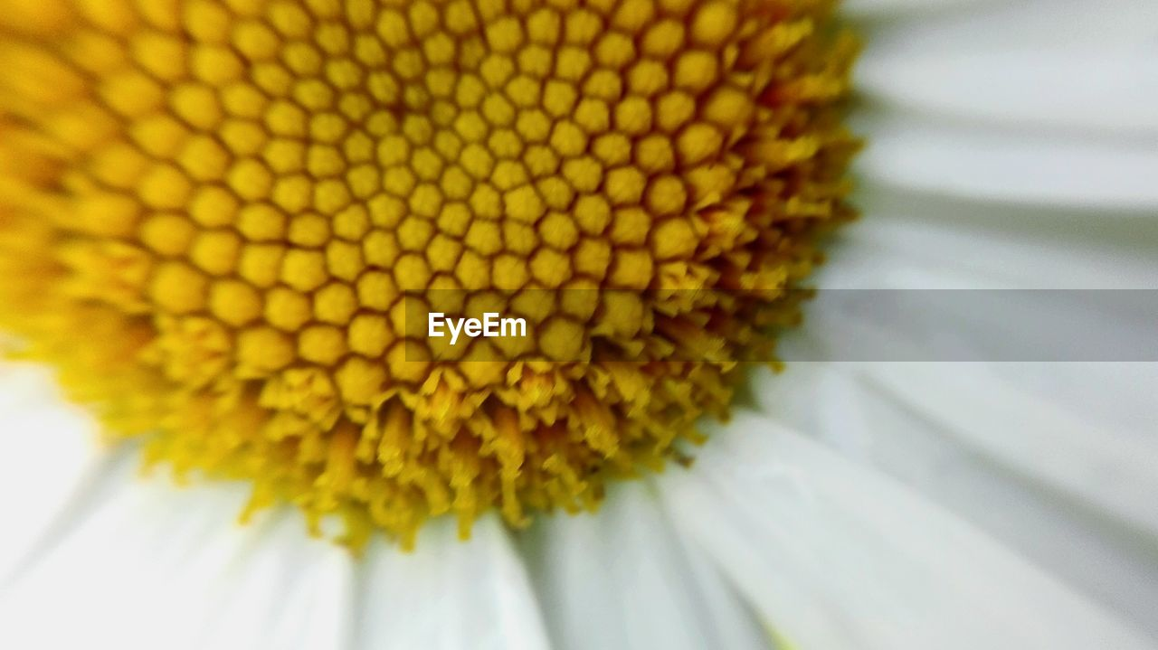 flower, fragility, petal, freshness, beauty in nature, flower head, sunflower, yellow, nature, close-up, pollen, no people, growth, day, plant, outdoors, blooming