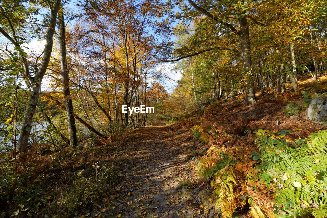 autumn, tree, nature, forest, change, leaf, scenics, footpath, beauty in nature, tranquil scene, single lane road, woodland, day, outdoors, tranquility, non-urban scene, the way forward, landscape, no people, growth, branch, grass, sky