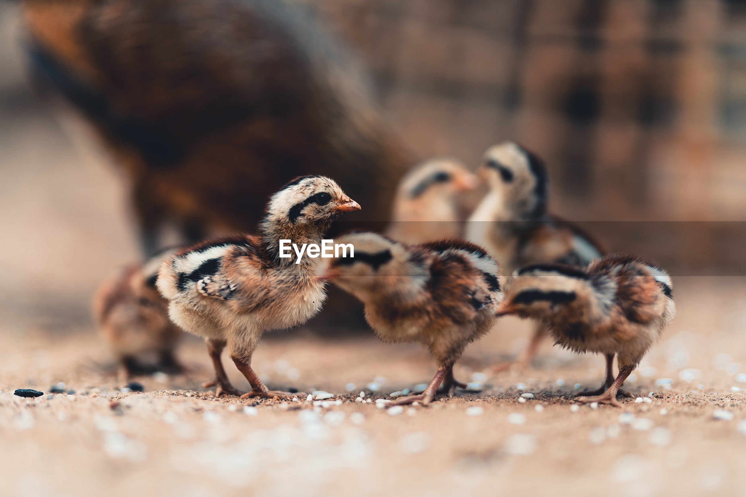 CLOSE-UP OF DUCKS ON A LAND