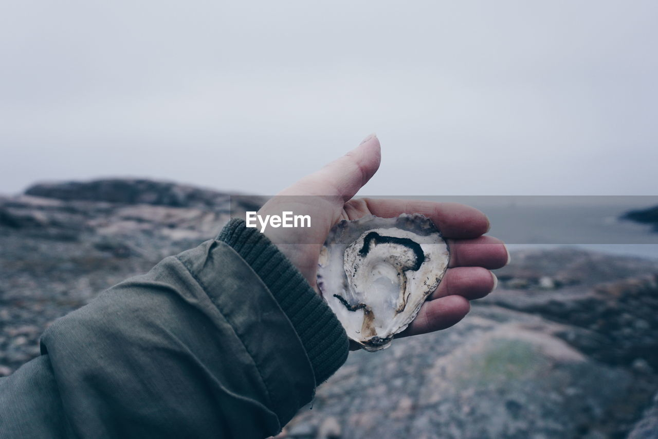 Close-Up Of Hand Holding Oyster