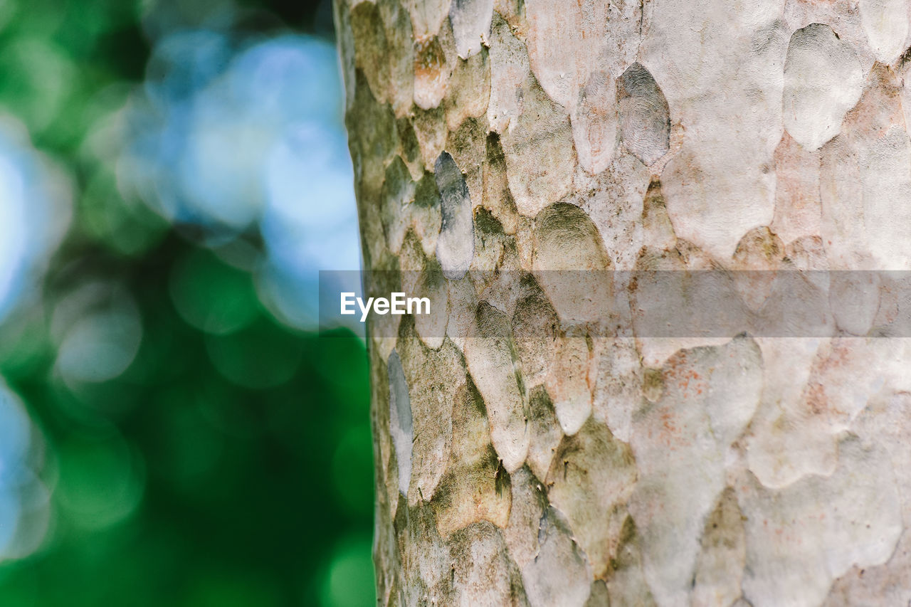 tree trunk, trunk, tree, close-up, focus on foreground, textured, day, plant, no people, pattern, rough, growth, outdoors, nature, plant bark, natural pattern, backgrounds, beauty in nature, bark, selective focus, textured effect, lichen