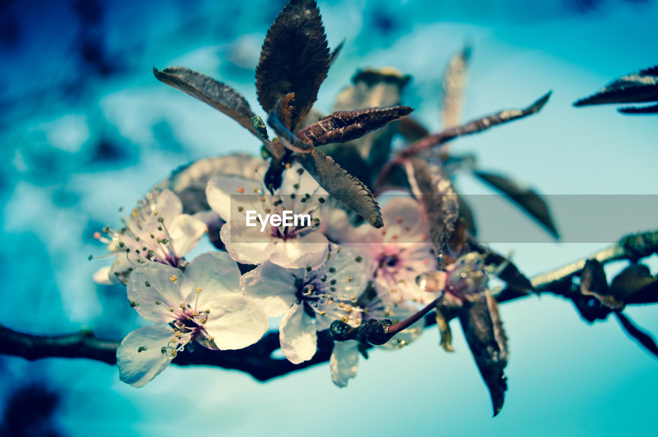 flower, beauty in nature, fragility, nature, no people, petal, close-up, freshness, growth, flower head, branch, day, stamen, springtime, outdoors, tree