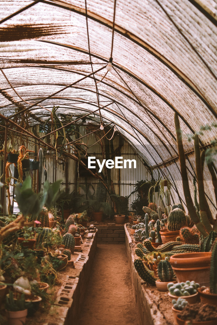 indoors, no people, greenhouse, business, architecture, day, potted plant, in a row, plant, arrangement, large group of objects, food and drink, growth, ceiling, built structure, nature, roof, wood - material, freshness, plant nursery