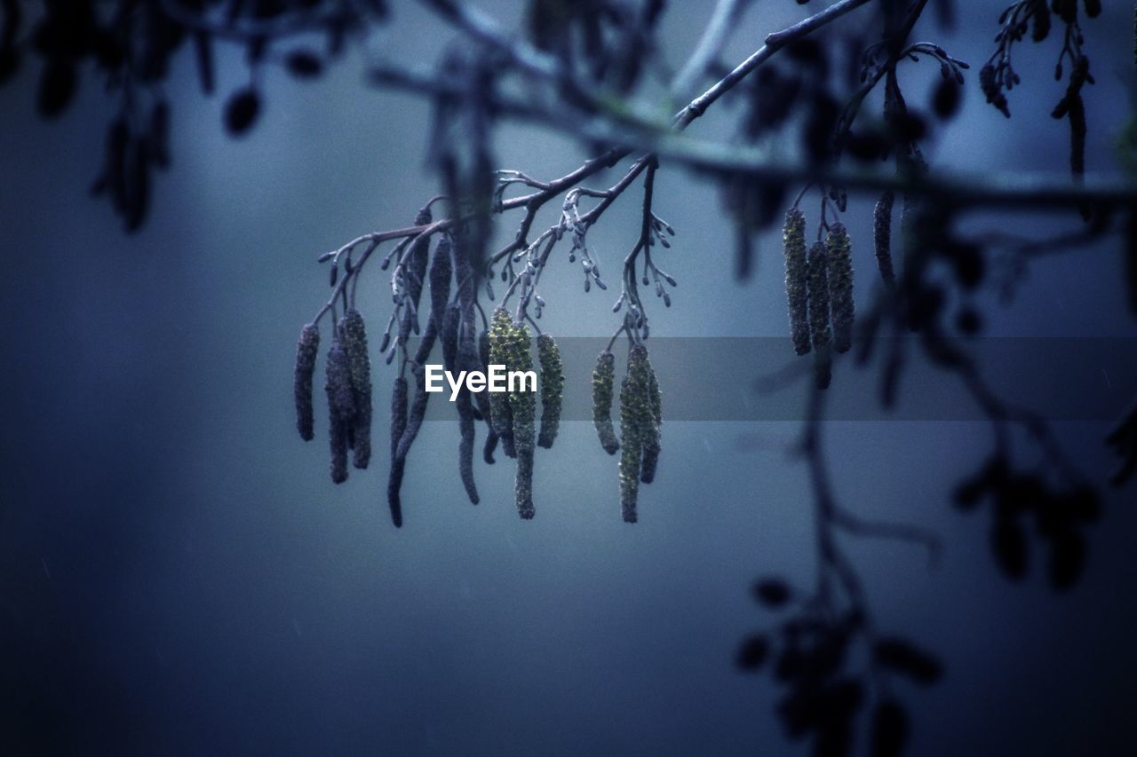 plant, tree, tranquility, beauty in nature, hanging, focus on foreground, no people, growth, close-up, nature, selective focus, water, day, branch, cold temperature, winter, frozen, outdoors, ice, coniferous tree