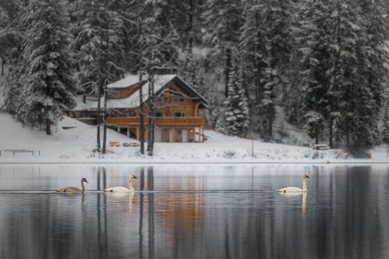 winter, tree, architecture, cold temperature, water, snow, built structure, building exterior, day, lake, bird, animal, animals in the wild, animal themes, nature, plant, animal wildlife, group of animals, no people, outdoors, snowing