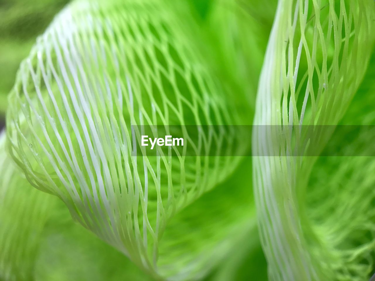 green color, close-up, freshness, growth, no people, nature, plant, beauty in nature, fragility, leaf, outdoors, day, frond