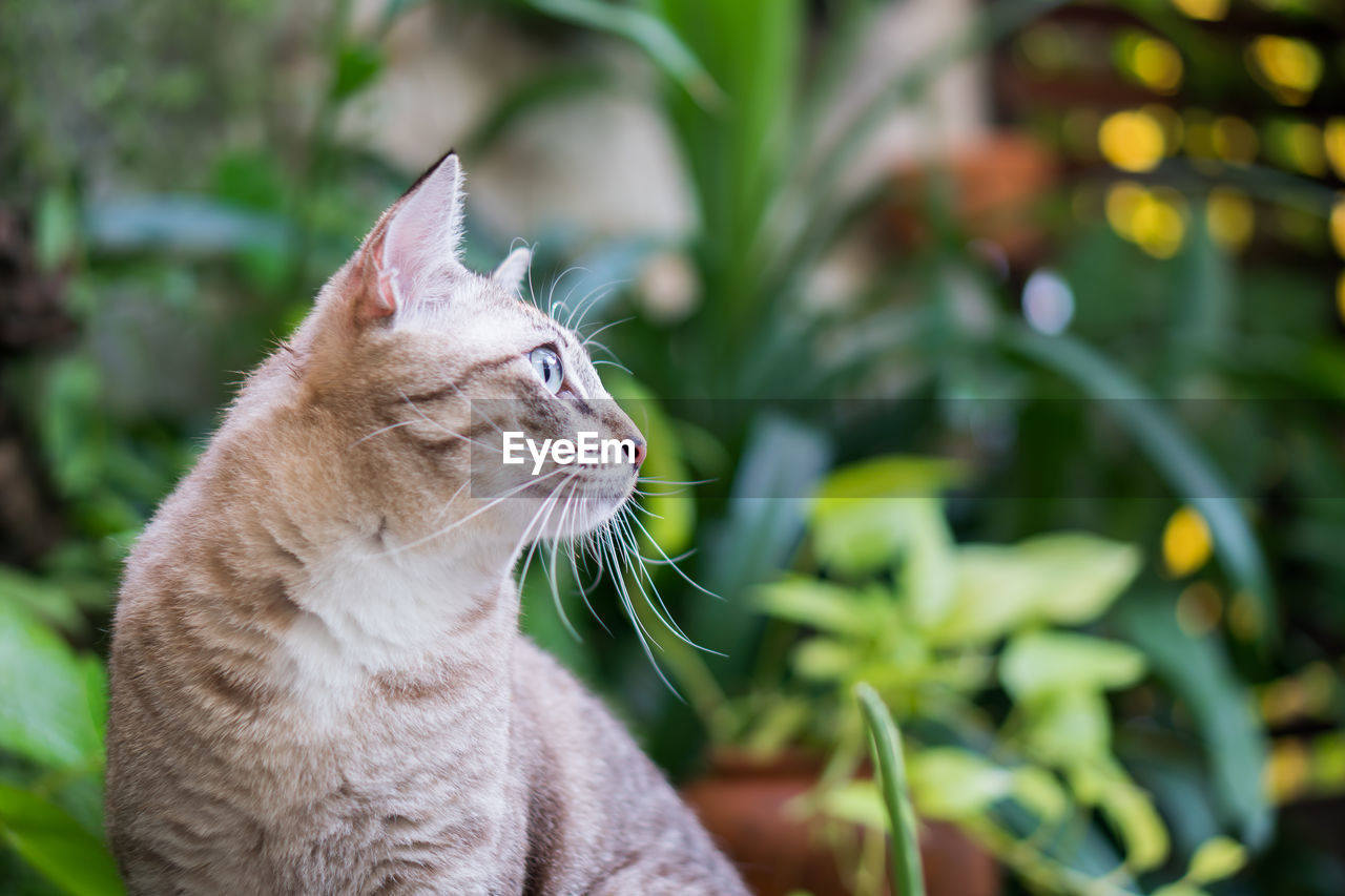 cat, domestic cat, feline, animal themes, pets, domestic, animal, domestic animals, one animal, mammal, vertebrate, no people, whisker, focus on foreground, looking, looking away, plant, close-up, plant part, leaf, animal head