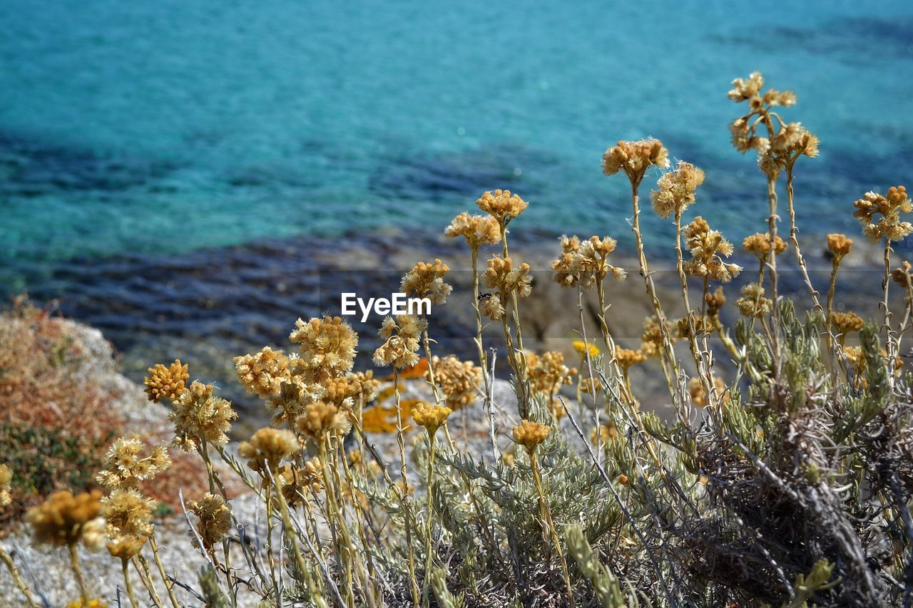 Yellow flowers booming against sea