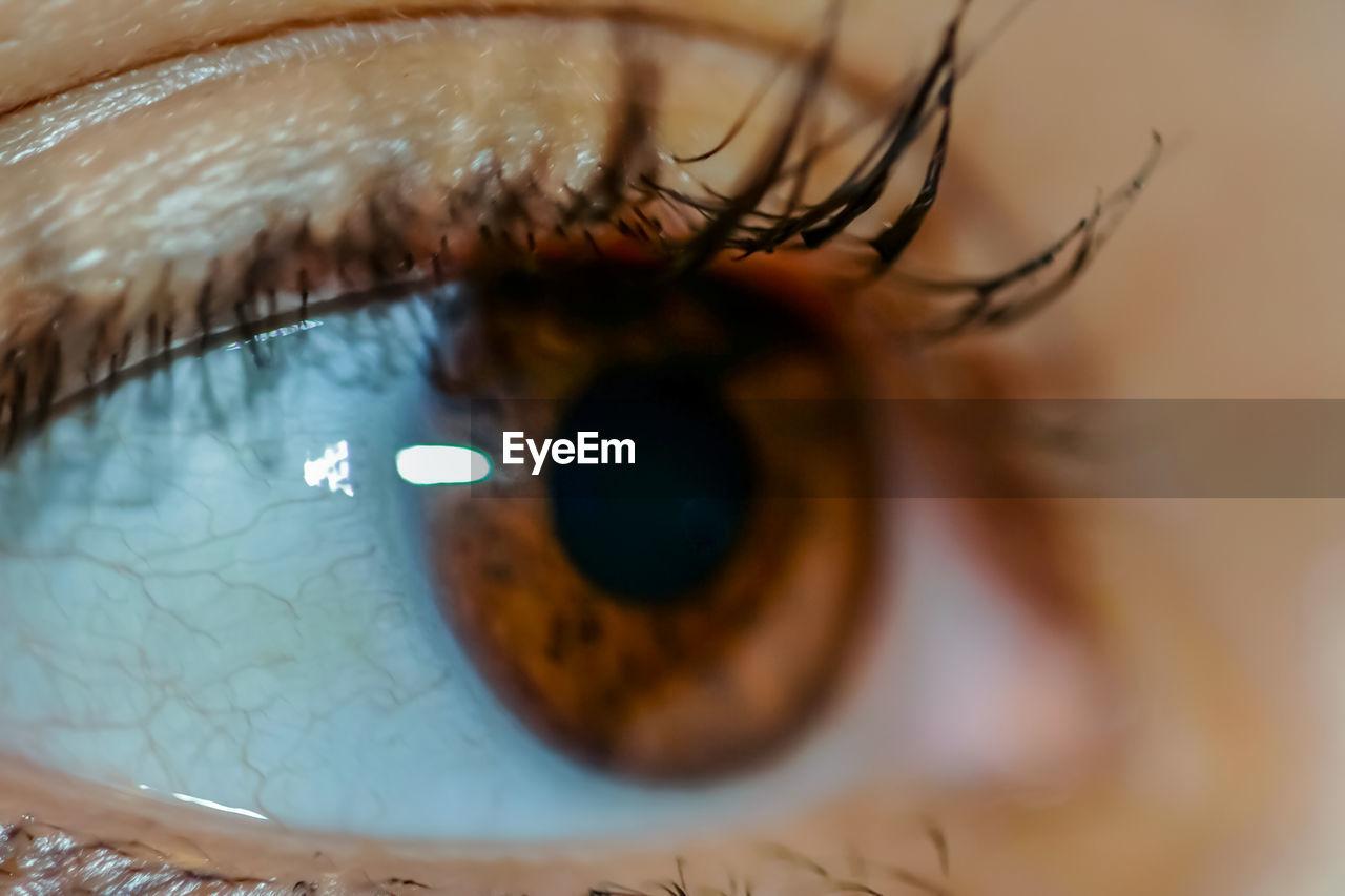 eyelash, human eye, eye, sensory perception, eyesight, human body part, eyeball, extreme close-up, body part, one person, close-up, iris - eye, unrecognizable person, real people, reflection, selective focus, macro, eyelid, adult, eyebrow, human face