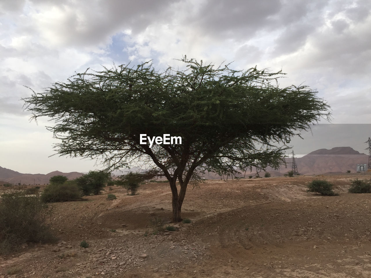 plant, sky, tree, cloud - sky, beauty in nature, environment, landscape, land, scenics - nature, nature, growth, tranquil scene, tranquility, day, non-urban scene, field, no people, outdoors, mountain, remote, arid climate, semi-arid