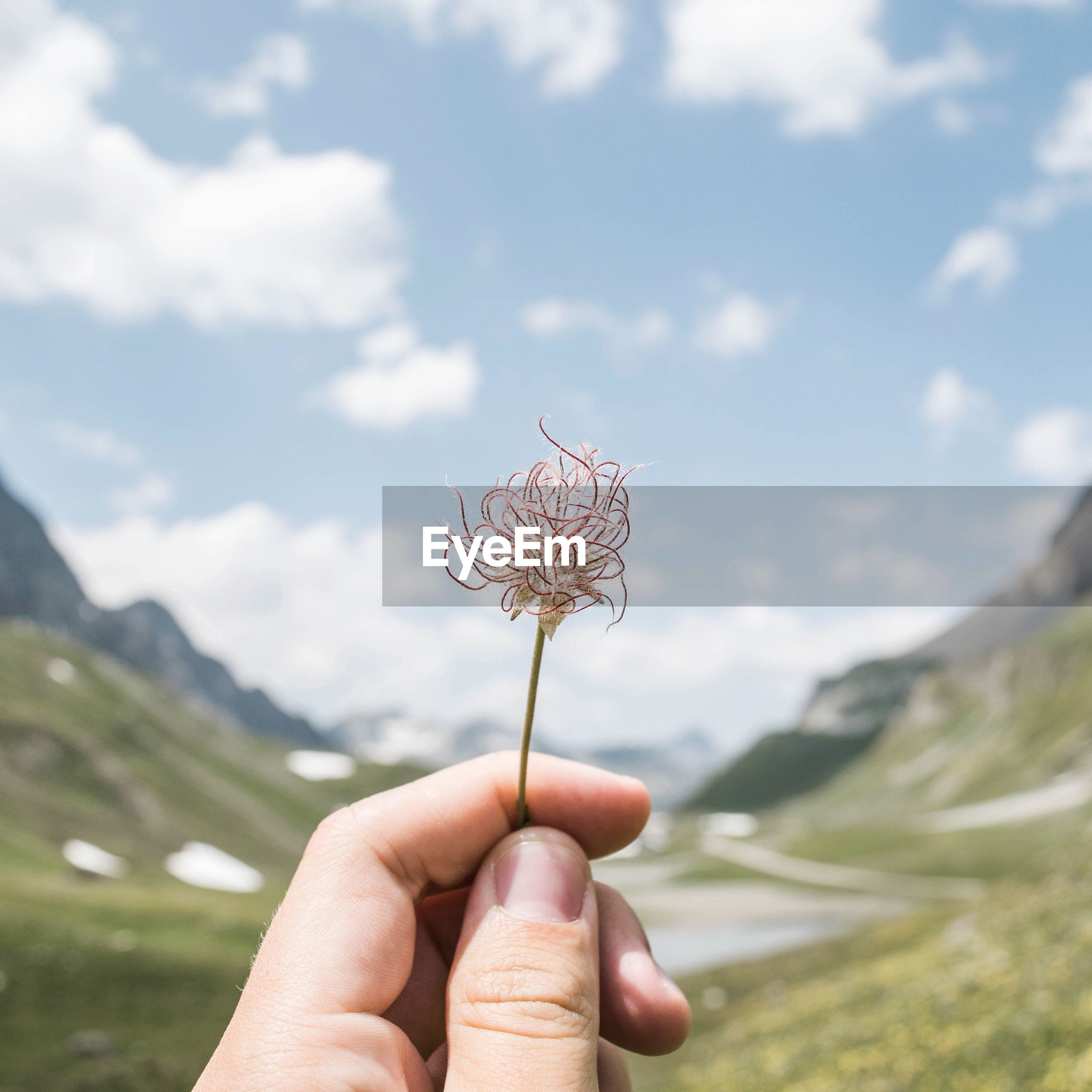 person, holding, part of, human finger, cropped, unrecognizable person, flower, personal perspective, focus on foreground, sky, nature, close-up, beauty in nature, fragility, leisure activity, lifestyles, outdoors
