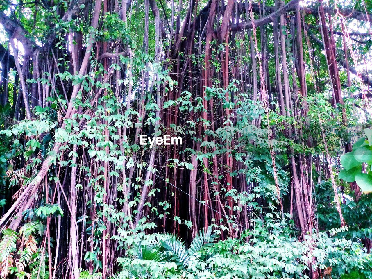 plant, forest, growth, tree, land, nature, beauty in nature, day, no people, outdoors, tranquility, plant part, foliage, leaf, lush foliage, green color, environment, waterfall, woodland, scenics - nature, bamboo - plant, rainforest