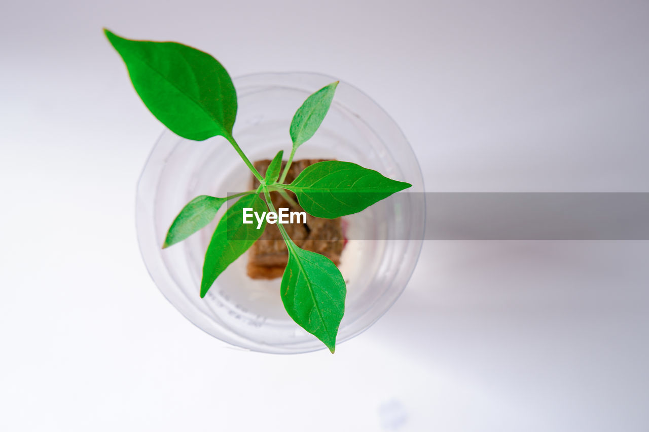 HIGH ANGLE VIEW OF LEAVES IN WHITE BACKGROUND