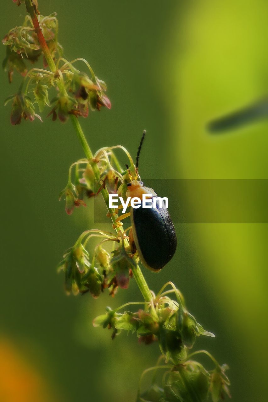 Close-up of bug on plant