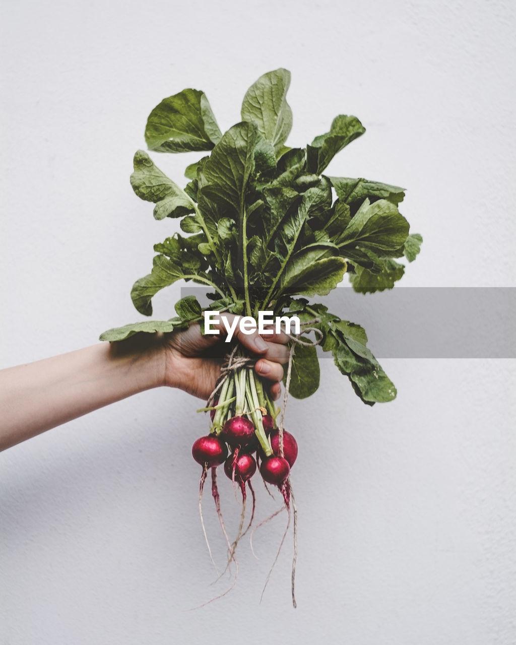 Cropped hand holding radishes against white background