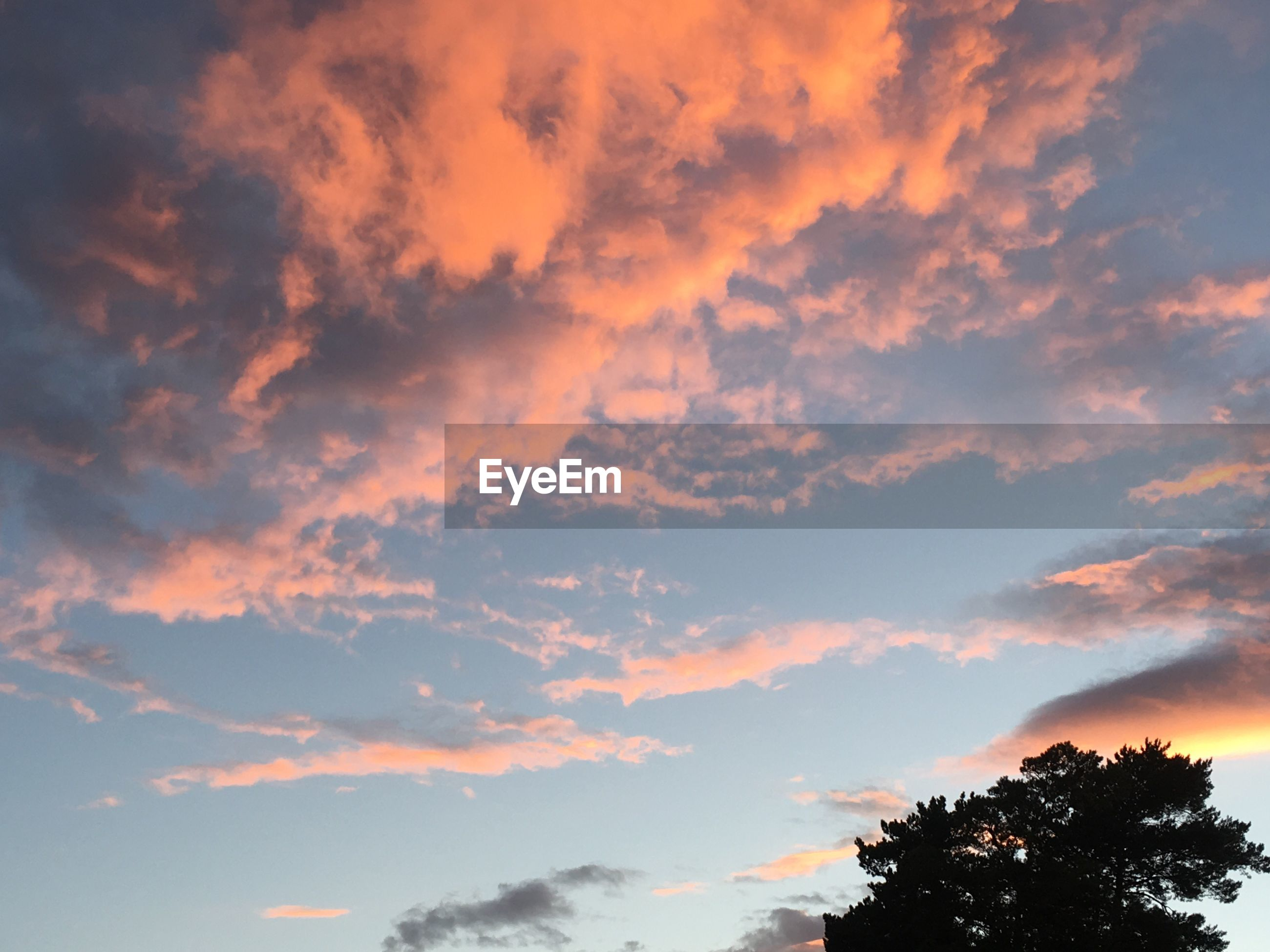 tree, low angle view, sky, scenics, sunset, beauty in nature, tranquil scene, tranquility, cloud - sky, nature, cloud, growth, high section, outdoors, cloudy, day, orange color, cloudscape, treetop, majestic, no people, non-urban scene, outline, dramatic sky, atmospheric mood, tree top