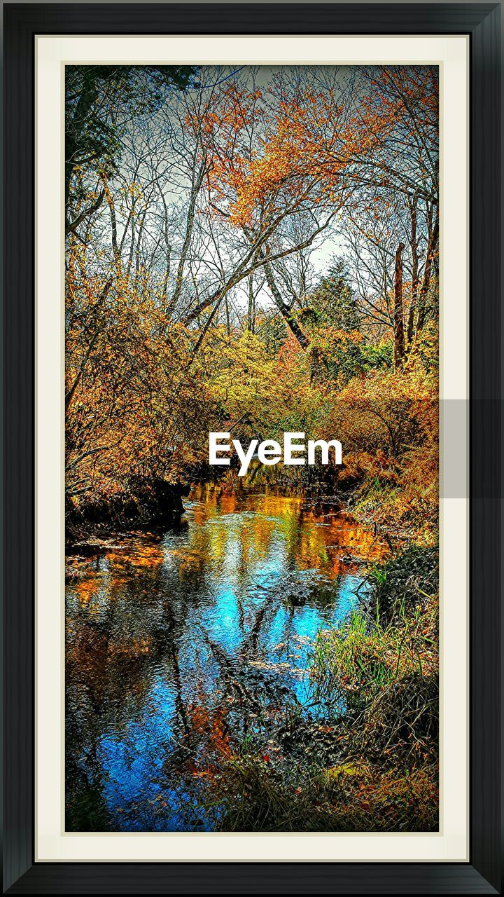 autumn, reflection, water, change, tree, leaf, nature, tranquil scene, tranquility, day, beauty in nature, no people, scenics, multi colored, growth, lake, outdoors, bare tree
