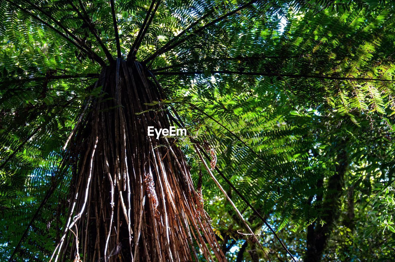 tree, plant, growth, forest, green color, beauty in nature, land, tree trunk, trunk, low angle view, no people, tranquility, nature, day, outdoors, scenics - nature, woodland, plant part, foliage, branch, tree canopy, bark, directly below, bamboo - plant, rainforest